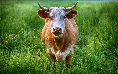 20 måder at bruge en rest af kød
